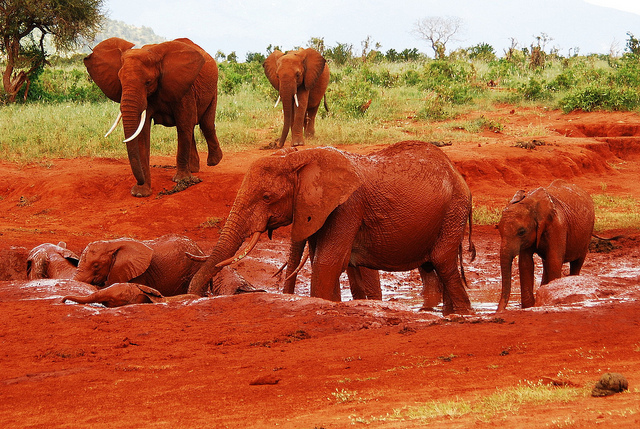 red_elephants_2